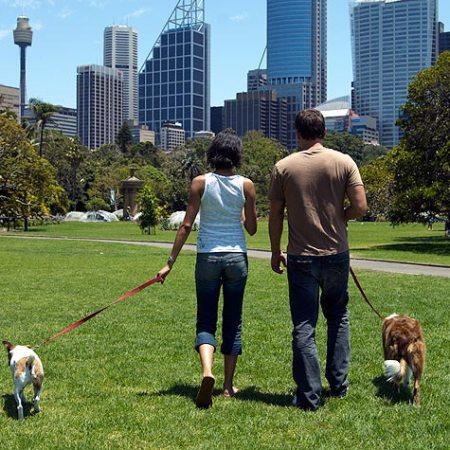 No Bravado - Keep Your Dog On-Leash