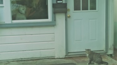 doggie-in-the-window-cat (2)