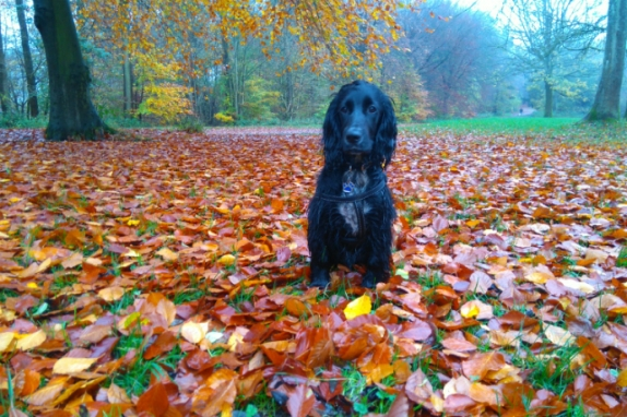 Dogs and leaves
