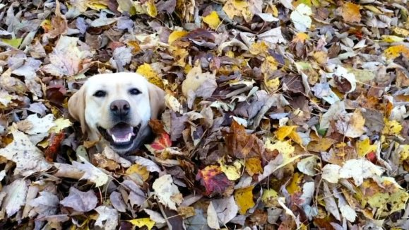 Dogs may love leaf jumping